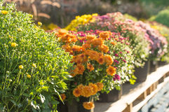 Potted garden at sunset Royalty Free Stock Photos