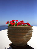 Potted geranium. Potted red geranium against a blue sky, Santorini Stock Images