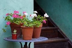 Potted geraniums on round table next to courtyard stairs Royalty Free Stock Photography