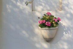 Potted geraniums on the white wall Stock Photos