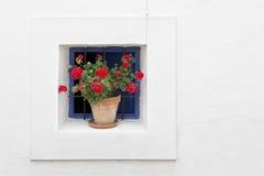 Potted geraniums Stock Photos