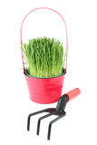 Potted grass Stock Photos