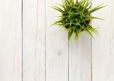 Potted grass flower over wooden table background Royalty Free Stock Images