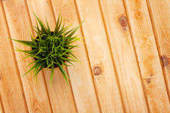 Potted grass flower over wooden table background Royalty Free Stock Photo