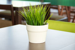 Potted grass Royalty Free Stock Photography