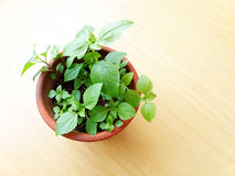 Potted green plant on wooden table Royalty Free Stock Photos