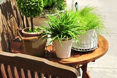 Potted green plants Royalty Free Stock Photography