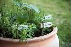 Potted herb garden with plant markers in german language, meanin. G lemon verbena and coriander, selected focus, narrow depth of field Royalty Free Stock Photo