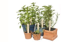 Potted herbs Stock Image