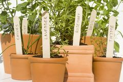 Potted herbs Royalty Free Stock Images