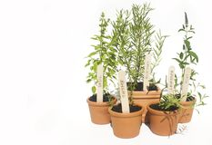 Potted herbs Stock Photos