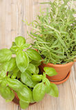 Potted Herbs - Basil and Rosemary Stock Image