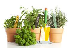 Potted herbs and gardening shovel Royalty Free Stock Photo