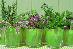 Potted herbs Royalty Free Stock Photo