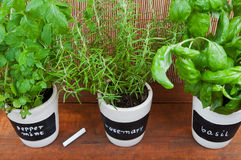 Potted herbs with labels Royalty Free Stock Photos