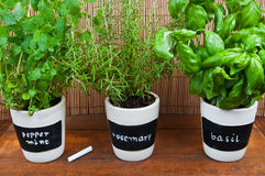 Potted herbs with labels. On a wooden background Stock Image