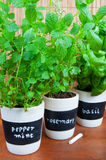 Potted herbs with labels Royalty Free Stock Photo