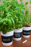 Potted herbs with labels. On a wooden background Royalty Free Stock Photos