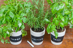 Potted herbs with labels Stock Photography