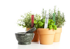Potted Herbs And Mortar Stock Photography