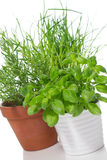 Potted herbs Royalty Free Stock Image