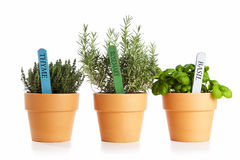 Potted italian herbs Stock Photos