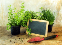Potted kitchen herb plants, a red shovel and a blank blackboard Royalty Free Stock Photography