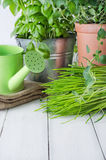 Potted Kitchen Herb Scene Royalty Free Stock Image