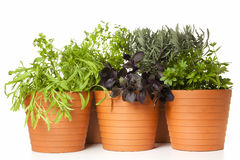 Potted kitchen herbs Royalty Free Stock Photos