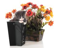 Potted Kitty Stock Image