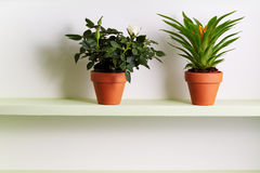 Potted Miniature Rose and Bromelia Plant On Shelf. Royalty Free Stock Photos