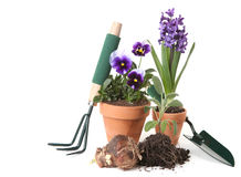Potted New Plantings Celebrating Springtime Garden. Ing on White Background Stock Photos