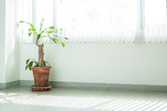 Potted ornamental Stock Photos