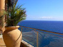 Potted palm on balcony by the sea Royalty Free Stock Image
