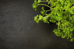 Potted parsley plant on slate with copyspace Stock Images