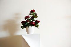 Potted plant Royalty Free Stock Photos