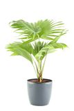 Potted Plant Royalty Free Stock Photo