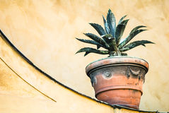 Potted plant. In front of brown wall Royalty Free Stock Image