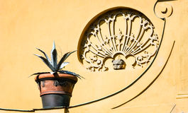 Potted plant. In front of brown wall Stock Image