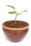 Potted plant Stock Image