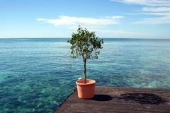 Potted Plant. A potted plant sitting on a deck overlooking the Caribbean Sea Royalty Free Stock Image