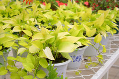 Potted plant. Close up of potted plant Royalty Free Stock Photography