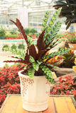 Potted plant. Close up of potted plant Royalty Free Stock Photo