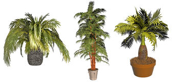 Potted plant collection Royalty Free Stock Photo