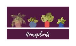 Potted plant collection. Different house plants set, vector flat cartoon illustration.  vector illustration