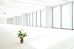 Potted plant in empty office Royalty Free Stock Images