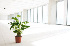 Potted plant in empty office space Royalty Free Stock Images