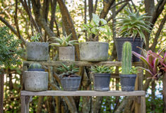 Potted plant in the garden Stock Photos