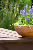 Potted plant in a garden Royalty Free Stock Images