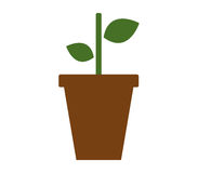 Potted plant icon with illustrated Royalty Free Stock Photography